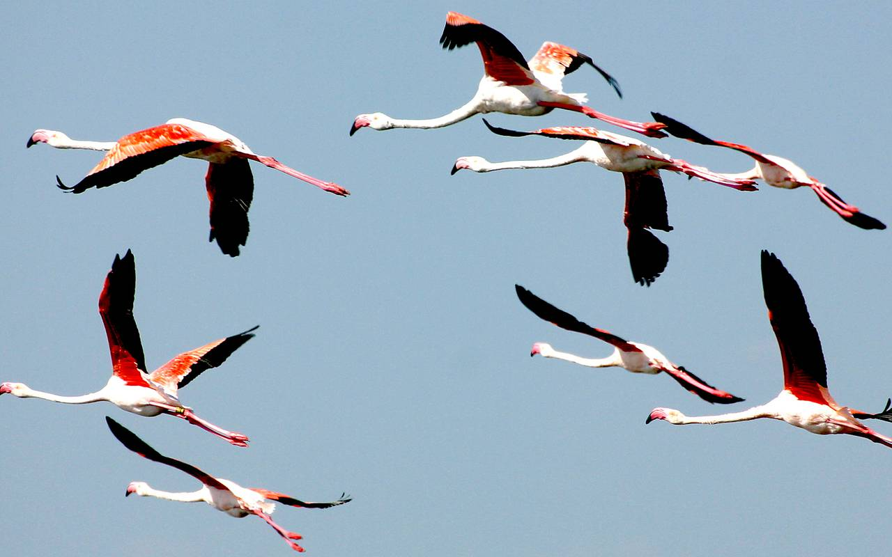 Camargue flamingos Aiges mortes hotel