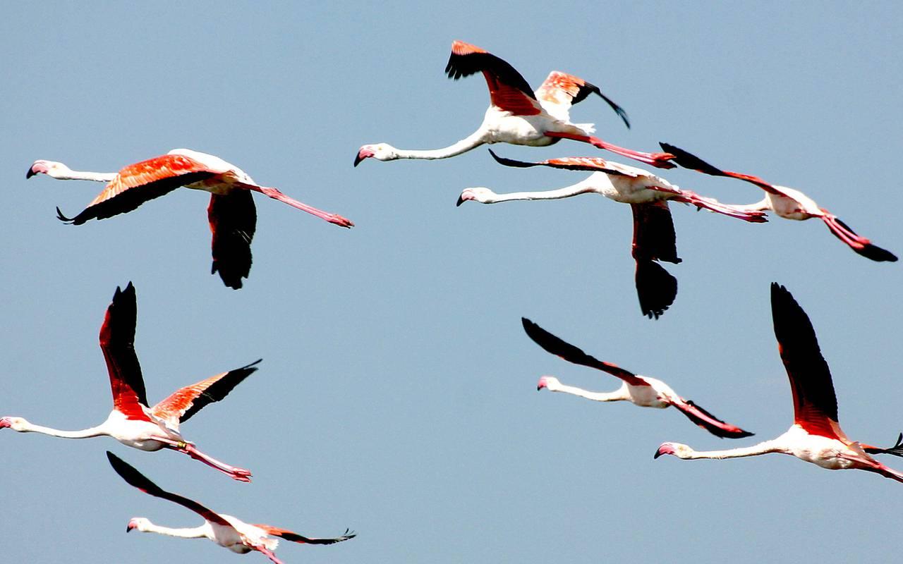 Pink flamingo charming hotel Camargue, Le Mas des Sables