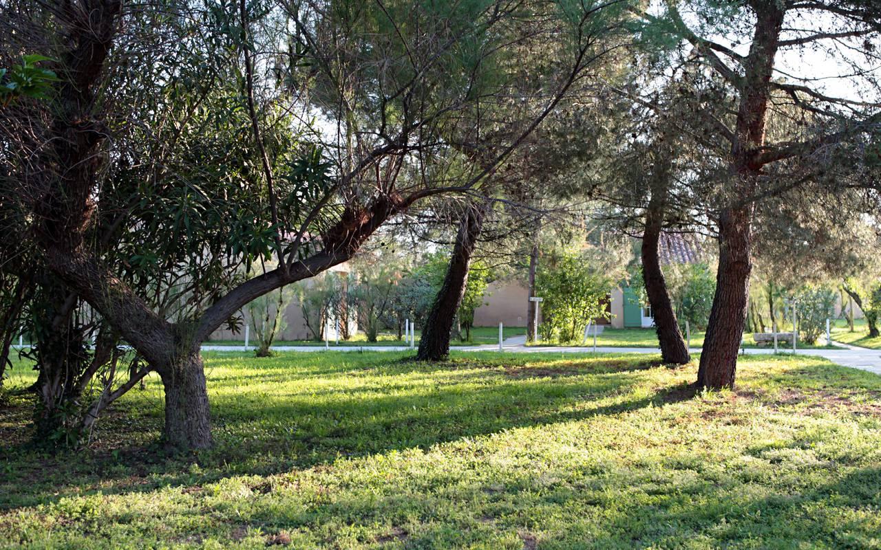 Jardin luxuriant hôtel Aigues mortes