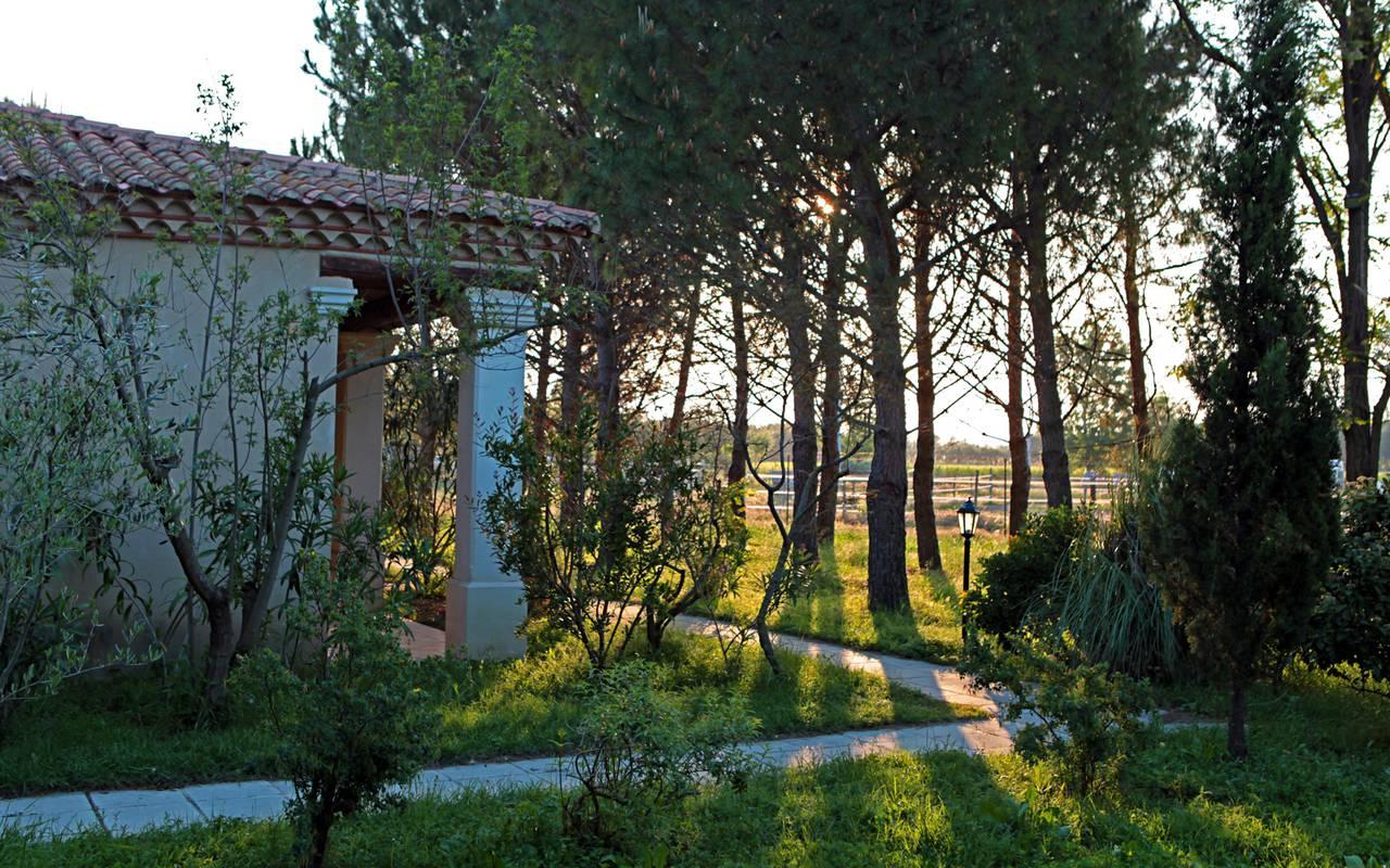 Splendides arbres hôtel de charme Aigues mortes