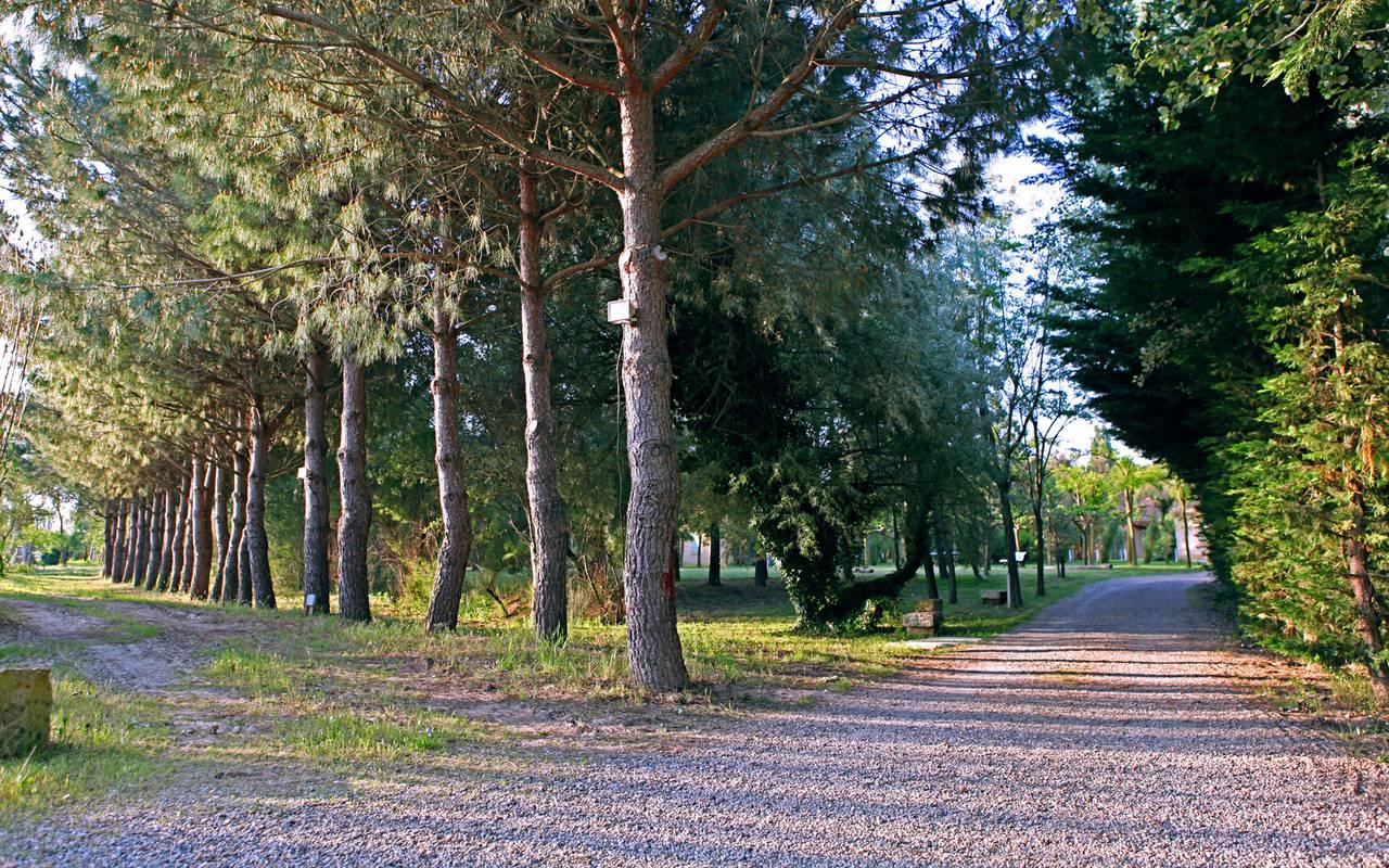 Forêt hôtel de charme Camargue